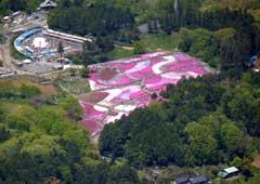 山頂から見た芝桜の丘(秩父山岳会・細淵さん撮影)