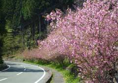 吉田のカイドウ街道