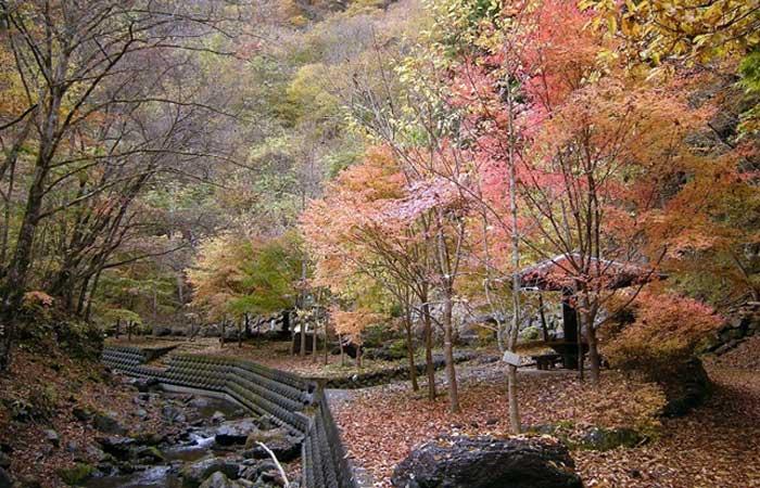 彩の国ふれあいの森 森林科学館