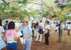 大塚ぶどう園